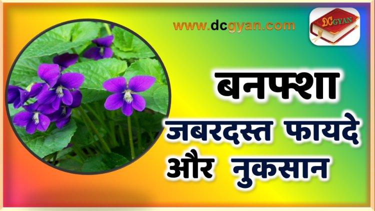 बनफ्शा के फायदे और नुकसान | Banafsha ke fayde | health benefits of Banafsha in hindi